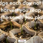 Words on Wednesday – Seeds not Harvest